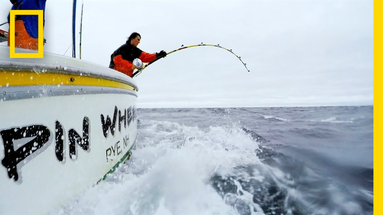 Down and Tight | Wicked Tuna thumbnail