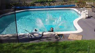 animale faza tare cu un iepure la piscina