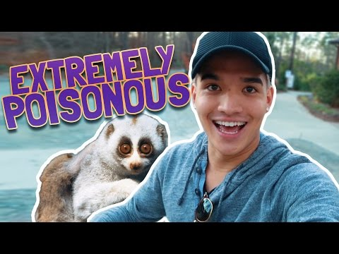 MOST ADORABLE POISONOUS ANIMAL ON THE PLANET!!