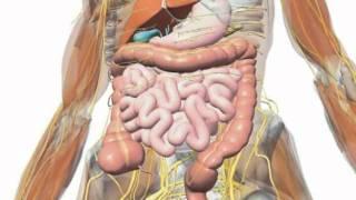 Gall Bladder Symptoms - Recognizing Your Gall Bladder Symptoms