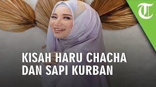 Kisah Haru Chacha Frederica dan Sapi Kurban