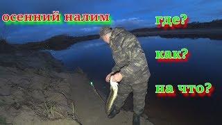 Ловля налима осенью на реке тура