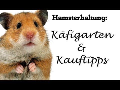 Hamsterhaltung: Käfigarten und Kauftipps
