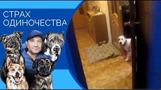 Страх одиночества(как помочь собаке оставаться дома одной)
