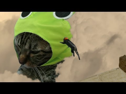 Attack On Titan's Opening Recreated With Cats