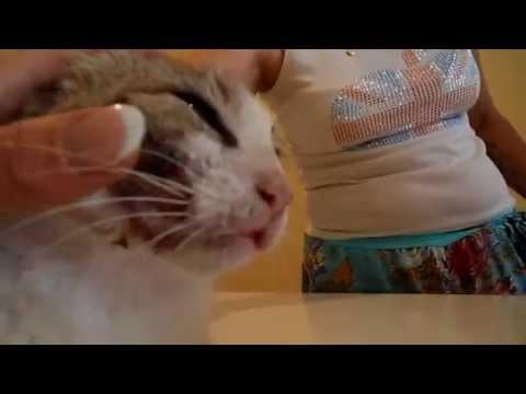 Фиолент-кошка абсцесс.