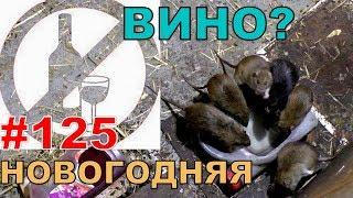 """#125. Реалити Шоу """"ALCARATZ"""". ДОМ 2 - Крысы. Новогодняя"""