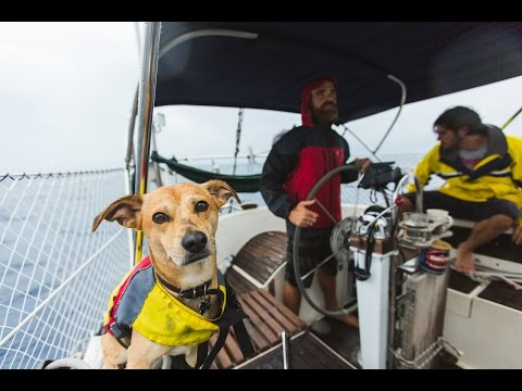 Absolutely mesmerizing YouTube series of three guys and a dog sailing the open waters of the Caribbean. Fantastic cinematography, sound, story, and music.