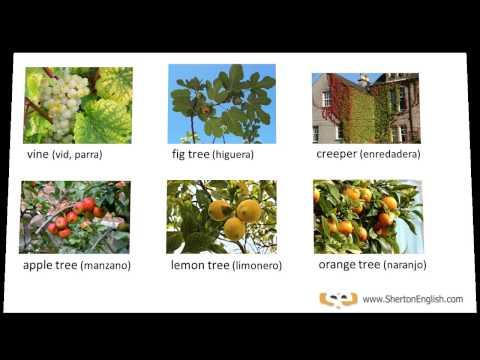 Vocabulario en ingl s rboles y plantas en ingl s - Clases de flores y sus nombres ...