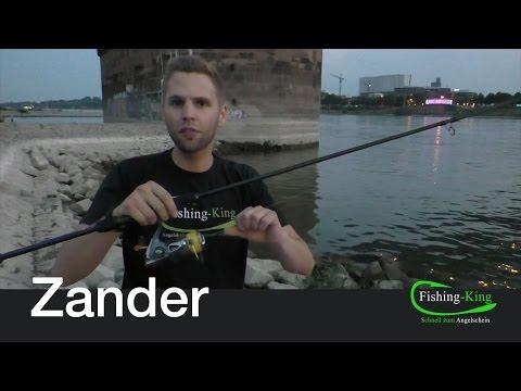 Zander-Angeln (Teil 1): Was brauche ich? | Fishing-King.de