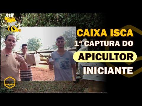 , title : 'A 1ª CAPTURA DO APICULTOR INICIANTE POR CAIXA ISCA