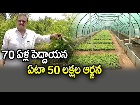 Organic Pomegranate Farming | Retired Employee Success Story | Gummagatta