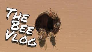 Hive entrance experiment - BeeVlog #132 - May 29, 2014