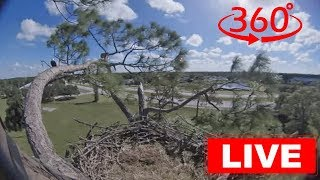 Southwest Florida Eagle Cam 360