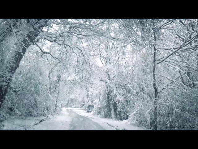 Blizzard Sounds for Sleep, Relaxation & Staying Cool   Snowstorm Sounds & Howling Wind in the Forest