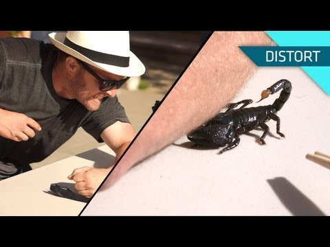 Watch A Scorpion Sting A Guy In Painful Slow Motion