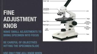 Compound Microscope Parts and Functions