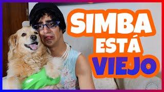 Daniel El Travieso - Ya Simba Está Viejito.