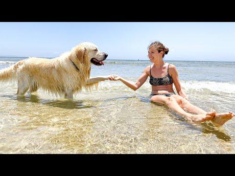 ADORABLE! El perro Golden Visita El Océano Por Primera Vez