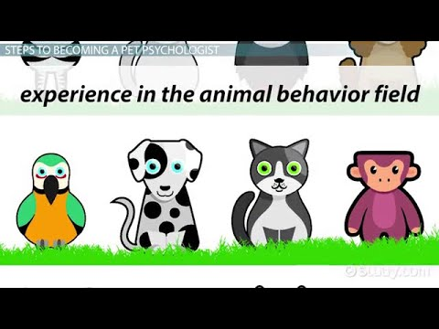 How to become a Pet Psychologist | Education and Career ...