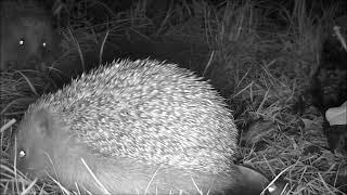 Wildlife Trail Camera - 9.6.2019