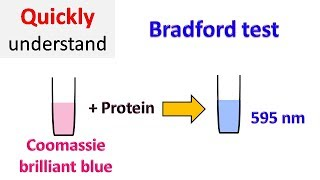 Bradford protein assay | Bradford test