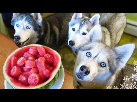 WATERMELON DOG TREAT How To Make Frozen DIY Dog Treats  | Snacks With The Snow Dogs 34