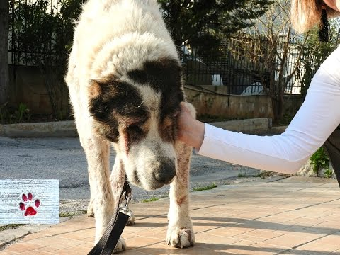 Rescue of a sick and exhausted senior dog