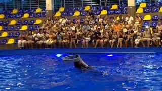 Аквапарк Коблево,дельфинарий Коблево, шоу дельфинов.Отдых на море . Приколы на море