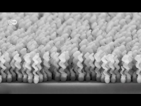 Die Analyse der Fäkalie auf die Eier der Wurm krasnodar