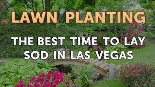 The Best Time to Lay Sod in Las Vegas