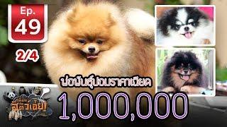 พ่อพันธุ์ปอมราคาเฉียด 1,000,000 - เพื่อนรักสัตว์เอ้ย EP 49 (2/4)