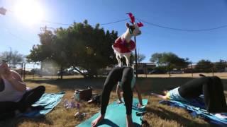 Goat Yoga Gilbert Arizona USA Today