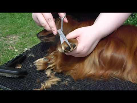 Das Öl für das Haar die Brennnessel und der Hopfen