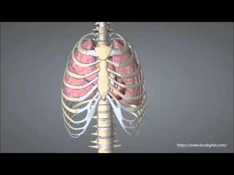 Die Schwäche die Kephalgie des Schmerzes im Hals