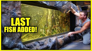 FINAL FISH ADDED TO MONSTER COMMUNITY AQUARIUM!