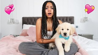 WE SURPRISED TIANA WITH A GOLDEN RETRIEVER PUPPY! **Emotional**