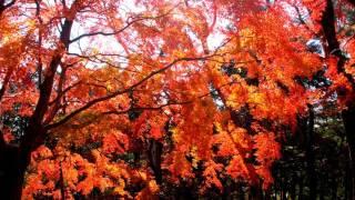 「根本山」紅葉気軽に行ける紅葉スポットinMooka栃木県真岡市