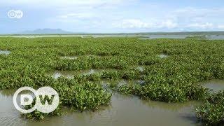 Turning menacing hyacinth into manure | Eco-at-Africa