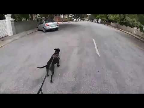 Hond + mens + skaatsplank = vet pret!