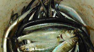 Рыбалка в открытом черном море одесса