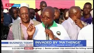 Public outcry in Tana River over 'Mathenge' invasion