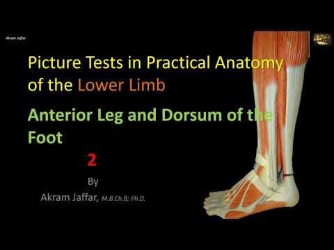 Test obrazkowy z anatomii kończyny dolnej - część 2