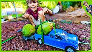 Trucks with Trailer Hauling Coconuts!