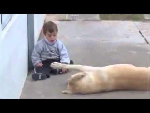 Anteprima Video Il tenerissimo video di un cane con un bambino down