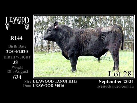 LEAWOOD TANGI R144