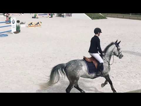 Gilles Nuytens CSI Small GP Juniors Lier 2017