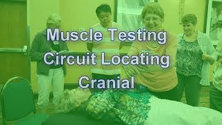 Muscle Testing with Cranial Circuit Locating
