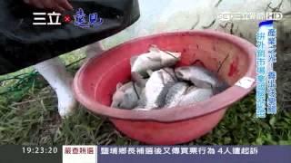 「台灣鯛」出頭天!獲國際認證拚外銷|show新台灣之光|三立新聞台