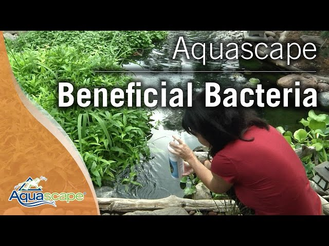 Crystal Clear Pond Water with Aquascape Beneficial Bacteria